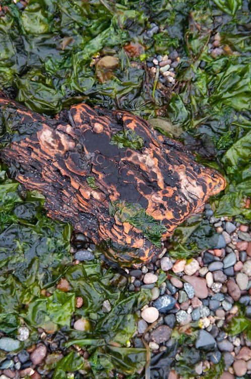 Beach Detail, Jones Island, San Juan Islands, Washington, US