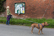A villager on a country walk with her Staffordshire Bull Terrier pauses to read the notices on a Parish Council community noticeboard, on 10th September 2018, in Lingen, Herefordshire, England UK.