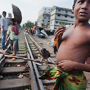 Life in the slums by the  railway tracks in Tejgaon. Homes are build closely to the tracks leading in and out of one of Dhaka's main train stations and life is goes on as in any othr part of Dhaka in spite of the dangerous proximity to the live tracks and trains passing at regular intervals. A boy with a bird, on the tracks.