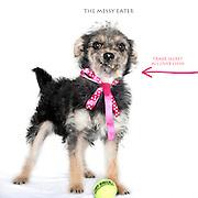 Sacramento city shelter dogs on Thursday, March 8, 2012.
