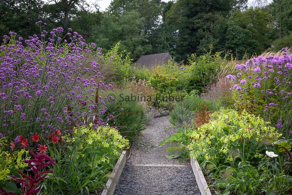 Wildegoose Nursery, The Walled Garden, Lower Millichope, Munslow, Shropshire - Verbena bonariensis, Nicotiana 'Lime Green' and Phlox x arendsii 'Luc's Lilac'