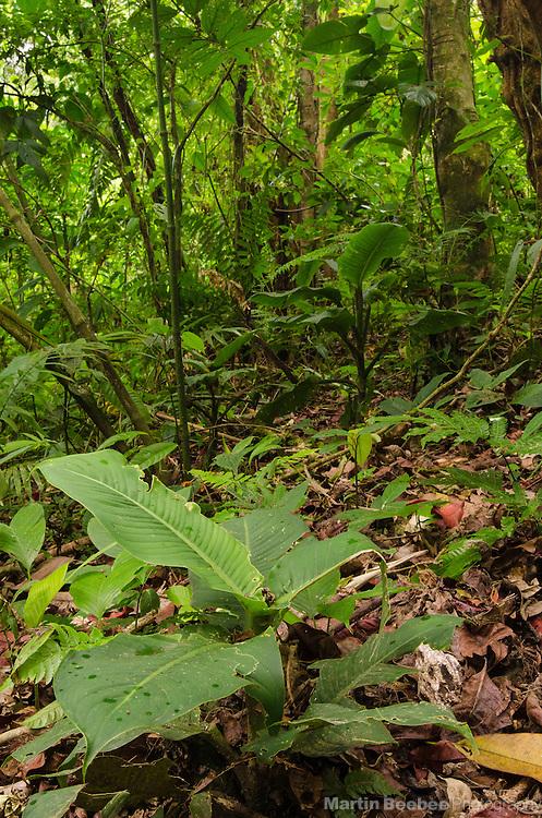 Rainforest near El Castillo, Costa Rica