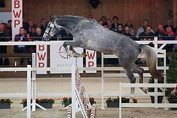 018, Patshinko van de Moskifarm<br /> Hengstenkeuring BWP - Lier 2018<br /> © Hippo Foto - Dirk Caremans<br /> 19/01/2018