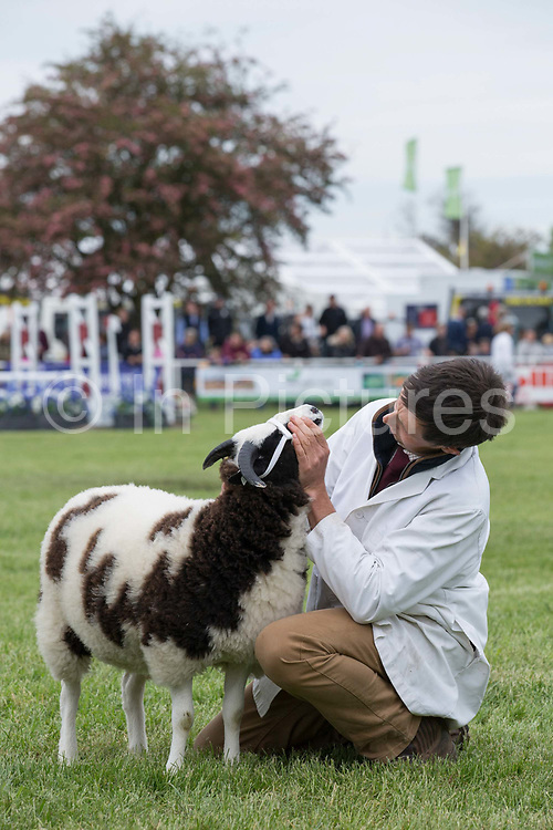 The Grand Parade at the annual Suffolk Show at the Suffolk Show Ground on the 29th May 2019 in Ipswich in the United Kingdom. The Suffolk Show is an annual show that takes place in Trinity Park, Ipswich in the English county of Suffolk. It is organised by the Suffolk Agricultural Association.