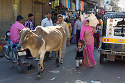 Crowded street scene cow roams among people at Sardar Market at Girdikot, Jodhpur, Rajasthan, Northern India