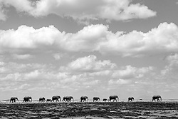 Dark clouds, near distance in shade and the elephants in the sunshine, the vast African plains & open sky, dwarfiing everything to ant size.<br /> <br /> BIO: Usha Harish is a wildlife photographer, safari planner based out of East Africa for the past 12 years, a chartered accountant turned photographer, an avid traveler, loves wildlife and nature, likes to capture the emotions of animals in their natural habitat. She wants to showcase the wilderness around and spread awareness to the world about conservation through her photographic work. Beautiful colors, animal patterns and animal behavior intrigue her as much as the act of translating those into images using the camera. She presently lives in Nairobi, Kenya. Usha conducts photo safaris and also does bookings for all nature lovers who wants to explore East Africa.<br /> <br /> WEBSITE: ushaharish.com<br /> INSTAGRAM: usha.harish.photography