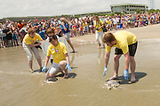 Volunteers place two Kemp's Ridley sea turtles at the waters edge during the release of rehabilitated sea turtles May 14, 2015 in Isle of Palms, South Carolina. The turtles were rescued along the coast and rehabilitated by the sea turtle hospital at the South Carolina Aquarium in Charleston.