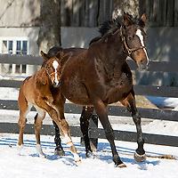 Curraghmore Farm - Mare and Foals