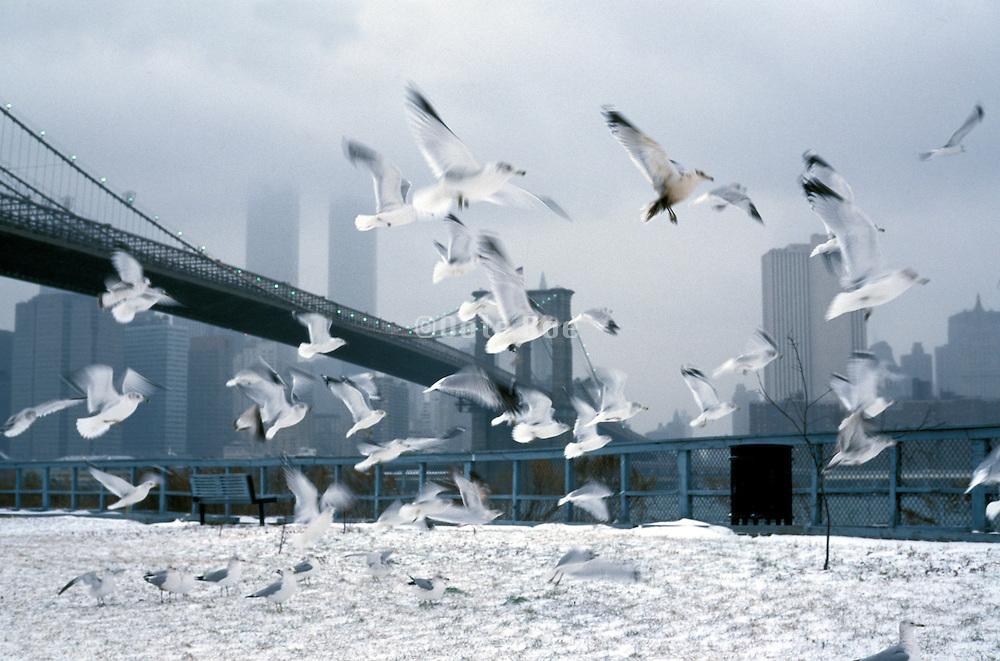 flock of sea gulls flying near Brooklyn Bridge