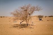 27012018. Niger. Agadez. Camp de refoulés d'Algérie géré par les autorités nigériennes. Depuis quelques mois, les expulsions de migrants d'Algérie s'intensifie. Ramenés à la frontière avec le Niger, ils sont envoyés par bus à Agadez. L'Oim y fait du profilage, les nigériens sont renvoyés chez eux, les étrangers sont envoyés dans le centre de l'OIM pour leur proposer une solution de retour dans leur pays.