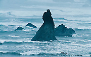 Pacific Ocean waves crash on sea stacks at Face Rock State Scenic Viewpoint, Bandon, Coos County, Oregon, USA.
