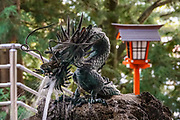 Dragons are a common motif in the fountains or chozuya provided in temples and shrines for cleansing the hands and mouths of worshipers before prayer. Chureito Pagoda, Fujiyoshida city, Yamanashi Prefecture, Japan. This five storied pagoda overlooks Fujiyoshida City. In clear weather it offers iconic views combined with Mount Fuji in the distance. The pagoda is part of the Arakura Sengen Shrine and was built as a peace memorial in 1963, nearly 400 steps up the mountain from the shrine's main buildings.