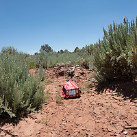 An empty beer case lays in the shrubbery along Indian Rte 930 in St Michaels, AZ.