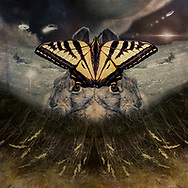 Abstract symmetrical photoshop art of a Monarch butterfly and Siamese rabbit heads over inverted grasses and underneath a space scene with UFOs. Plus, silver ocean wings.