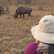 Tourists viewing white rhinos in Timbavati Game Reserve, South Africa.