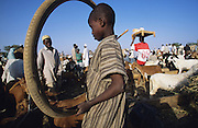 Youth with bicycle tyre. Sheep and cattle market during Ramadan after the Durbar Fantasia in Kano..The implementation of Islamic Sharia Law across the twelve northern states of Nigeria, centres upon Kano, the largest Muslim Husa city, under the feudal, political and economic rule of the Emir of Kano. Islamic Sharia Law is enforced by official state apparatus including military and police, Islamic schools and education, plus various volunteer Militia groups supported financially and politically by the Emir and other business and political bodies. Fanatical Islamic Sharia religious traditions  are enforced by the Hispah Sharia police. Deliquancy is controlled by the Vigilantes volunteer Militia. Activities such as Animist Pagan Voodoo ceremonies, playing music, drinking and gambling, normally outlawed under Sharia law exist as many parts of the rural and urban areas are controlled by local Mafia, ghetto gangs and rural hunters. The fight for control is never ending between the Emir, government forces, the Mafia and independent militias and gangs. This is fueled by rising petrol costs, and that 70% of the population live below the poverty line. Kano, Kano State, Northern Nigeria, Africa