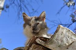 April 2, 2017 - Artaki, Greece - Cats in Artaki on Euboea on April 2, 2017  (Credit Image: © Wassilios Aswestopoulos/NurPhoto via ZUMA Press)