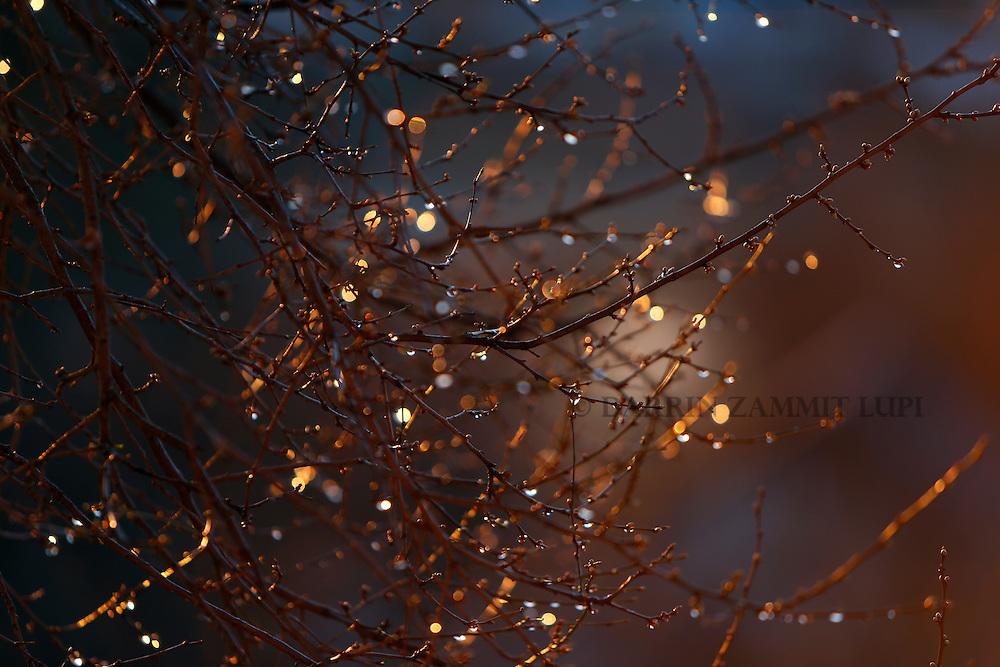 Water drops glisten on tree branches in Slavonski Brod, Croatia, at sunrise February 11, 2016.<br /> Photo: Darrin Zammit Lupi