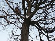 Saint Petersburg, Russia, A squirrel in a park
