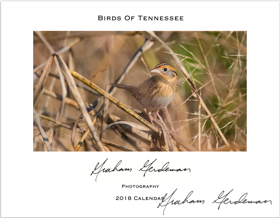 """2018 Birds of Tennessee Calendar - 8x11<br /> <br /> I mostly focused on migratory birds with this collection, rather than those that Tennessee natives see year round at feeders. Several are only found within limited habitats and limited areas of the state.<br /> <br /> To purchase, click """"Add to Cart"""" and select the 8x12 Print option. All calendars are a standard Matte finish. Price is $15 plus $2.50 Shipping and handling (US residents)."""