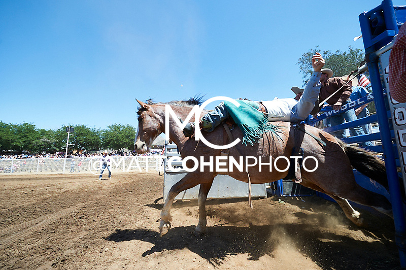 Bareback rider Grant Denny of Minden, NV rides Seminol Sis at the Woodlake Lions Rodeo.<br /> <br /> <br /> UNEDITED LOW-RES PREVIEW<br /> <br /> <br /> File shown may be an unedited low resolution version used as a proof only. All prints are 100% guaranteed for quality. Sizes 8x10+ come with a version for personal social media. I am currently not selling downloads for commercial/brand use.