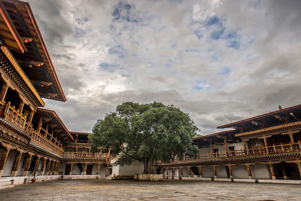 Bodhi tree in Punakha Dzong, Bhutan<br /> <br /> Full photoessay at http://xpatmatt.com/photos/bhutan-photos/