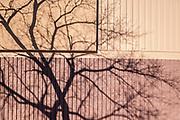 Tree and building, Winnipeg, Manitoba, Canada