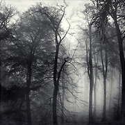 Trees in morning fog on a spring day - textured photograph in black and white
