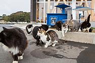 """I hamnen på ön Tashirojima i Japan bor några katter. De hälsar besökare välkomna.<br />  <br /> Tashirojima kallas för """"kattön"""" eftersom här lever hundratals katter tillsammans med ca 50 personer.   <br /> <br /> Ishinomaki, Miyagi Prefecture, Japan. <br /> <br /> Fotograf: Christina Sjögren<br /> Copyright 2018, All Rights Reserved"""