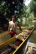 PENAN, MALAYSIA. Sarawak, Borneo, South East Asia. Penan hunter with wild boar.Tropical rainforest and one of the world's richest, oldest eco-systems, flora and fauna, under threat from development, logging and deforestation. Home to indigenous Dayak native tribal peoples, farming by slash and burn cultivation, fishing and hunting wild boar. Home to the Penan, traditional nomadic hunter-gatherers, of whom only one thousand survive, eating roots, and hunting wild animals with blowpipes. Animists, Christians, they still practice traditional medicine from herbs and plants. Native people have mounted protests and blockades against logging concessions, many have been arrested and imprisoned.