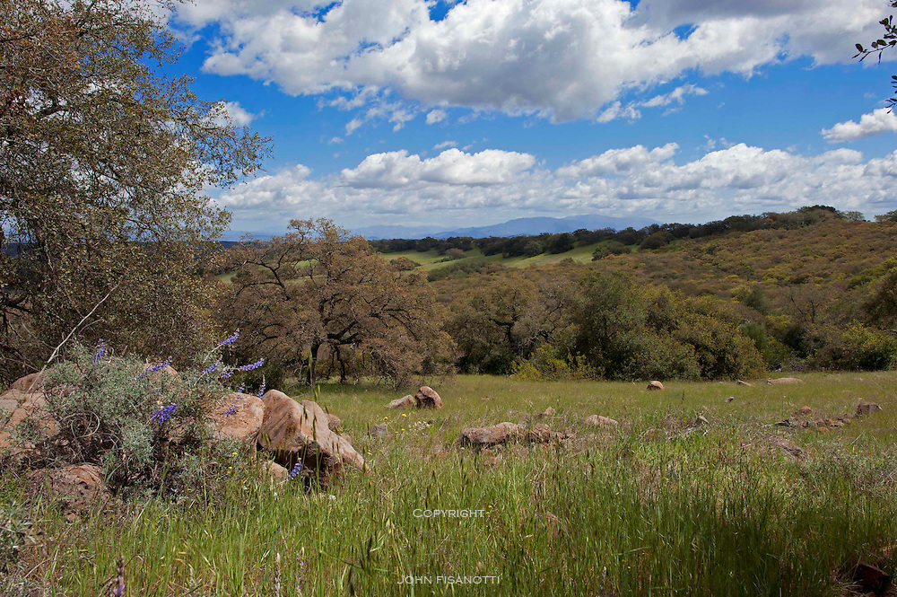 A beautiful March day in Santa Rosa Plateau Reserve of Riverside County