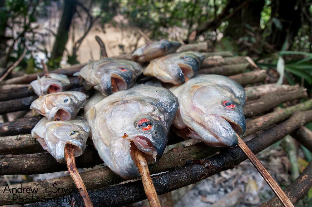Black piranhas (Serrasalmus rhombeus) being roasted for dinner.