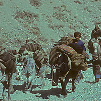 A Tibetan family flees into Nepal from the border province of Mustang with their belongings carried on the backs of horses and yaks.  Until the Chinese overwhelmed Tibet in the Fifties, this route through the Kali Gandaki Gorge was a common trade route between Nepal, India and Tibet.