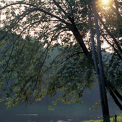 Canterbury, NH.Hazy, late afternoon sunlight shines through a silver maple along the Merrimack River at Gold Star Farm, Canterbury, New Hampshire.