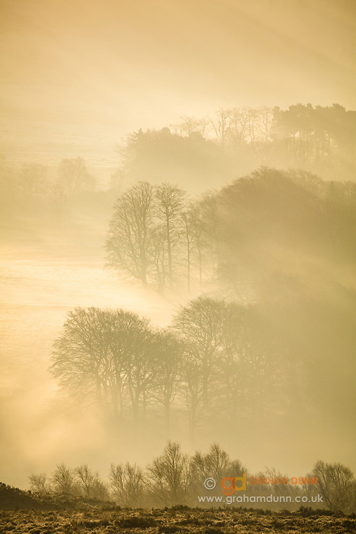 Morning mist, transformed to a warm glow by the rising sun, and layers of winter trees in the Peak District's Longshaw Estate. An atmospheric landscape scene in Derbyshire, England, UK.
