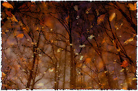 Abstract Reflection of Trees in Puddle - Watercolor Effect