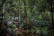 Le parc national de la Salonga est une forêt tropicale humide de la taille des Pays-Bas. Dans cette jungle épaisse, en l'absence de routes, la progression des rangers est lente et compliquée.