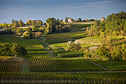 Ripe black grapes in vineyard of hill slopes at St Emilion in the Bordeaux wine region of France
