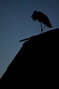 White stork on roof, Photo by Davis Ulands | davisulands.com
