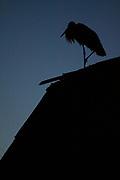 White stork on roof, Photo by Davis Ulands | davisulands.com