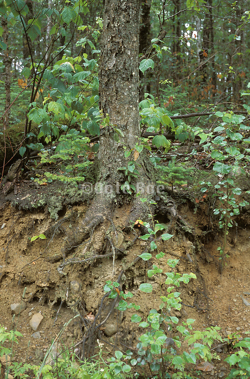 close up of the roots of a tree.