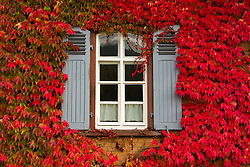 THEMENBILD - Ein Fenster umgeben von rot, grünen Herbstblättern am 16. Oktober 2015 in Elzach, Deutschland // A window surrounded by red, green autumn leaves at Elzach, Germany on 2015/10/16. EXPA Pictures © 2015, PhotoCredit: EXPA/ Eibner-Pressefoto/ Fleig<br /> <br /> *****ATTENTION - OUT of GER*****
