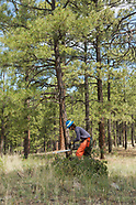 FOREST SERVICE PROTECTION OF ANCESTRAL PUEBLO RUINS