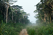 Road Brazzaville to Mbomo (N2)<br /> Republic of Congo (Congo - Brazzaville)<br /> AFRICA