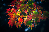 A beautiful blend of Autumn-colored leaves.