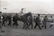 """26/06/1965<br /> 06/26/1965<br /> 26 June 1965<br /> Irish Sweeps Derby at the Curragh Race Course, Co. Kildare. Image shows """"Meadow Court"""" (L. Piggott up) jointly owned by Bing Crosby, Mrs Frank McMahon and Mr. G.M. Bell after winning the Irish Derby at the Curragh."""