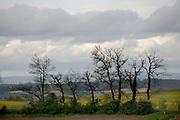 rural landscape view France Languedoc during spring season