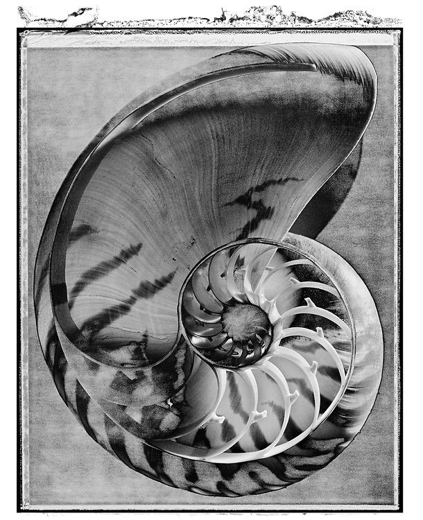Solaroid - Shells - Nautilus 1 - This is a solarised polaroid photo art print by Paul Williams who invented the technique and is the only photographer to have used it. The process is sadly no longer possible. Taken in 1989, .<br /> <br /> Visit our FINE ART PHOTO  PRINT COLLECTIONS for more wall art photos to browse https://funkystock.photoshelter.com/gallery-collection/Fine-Art-Photo-Prints-by-Photographer-Paul-Williams/C0000UM829OLMVv8 .