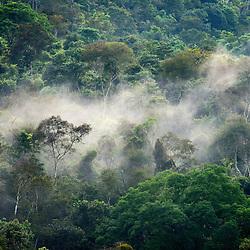 Típica paisagem de Mata Atlântica, na Reserva Biológica de Duas Bocas, em Cariacica/ES, com neblina presente.