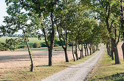 Tree-lined county road, Hungary